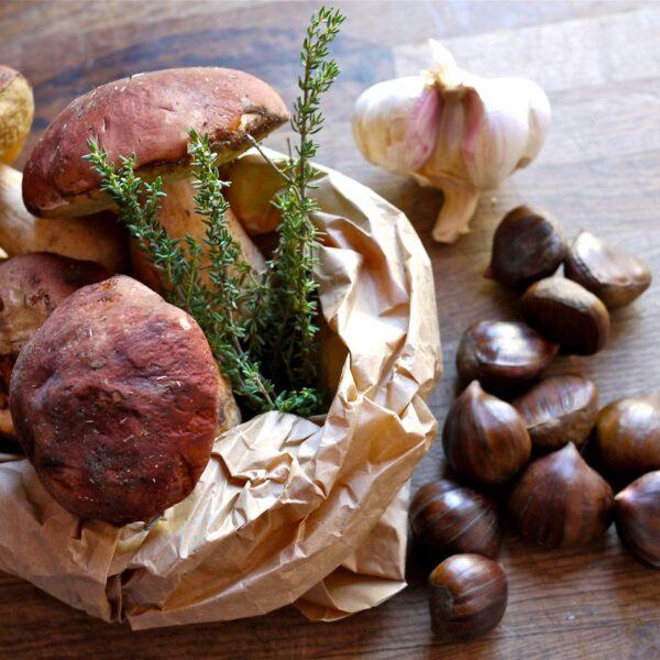 Funghi e castagne funghi e castagne